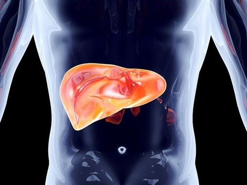 Is This Detox Organ Working in Your Body?